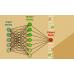 پروژه مدل بهینه شبکه عصبی در نواحی کاری نادر و معمولی بر اساس تکنیک خوشهبندی با MATLAB
